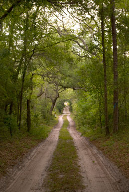 Dirt Road Between Trees