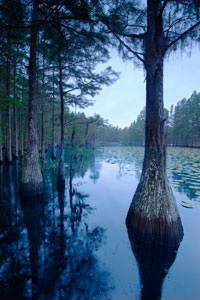 Scenic View of Trees in Water