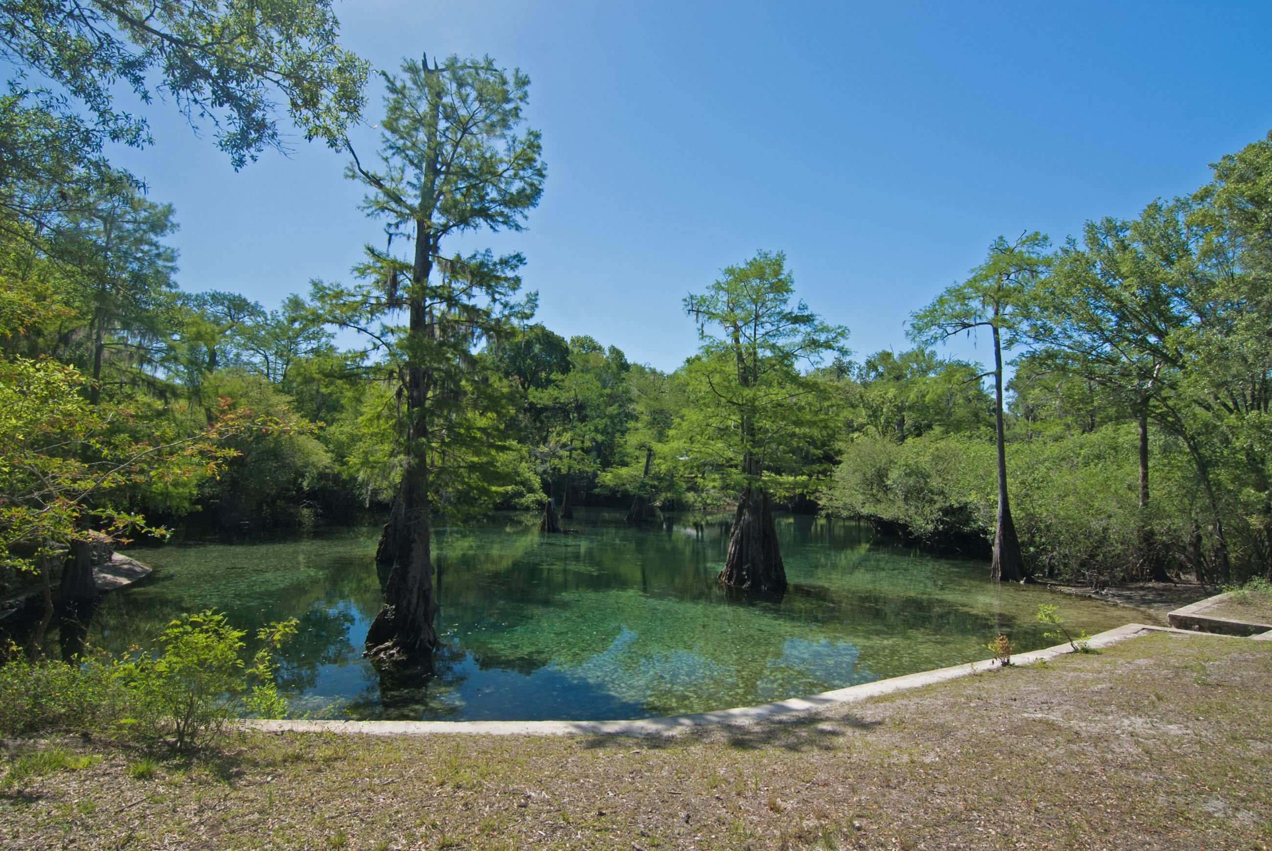 Clear spring with cypress trees in the middle of the water